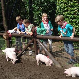 Aralea - Kinderboerderij Mikerf - boerderijkamp zomervakantie