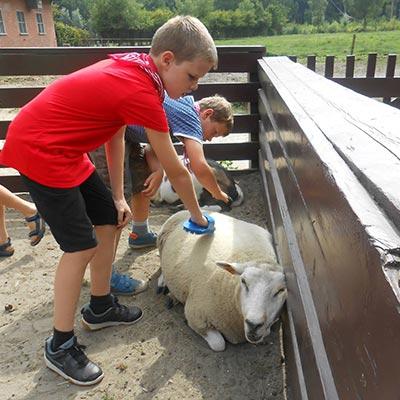 Aralea - Kinderboerderij Mikerf - boerderijkamp