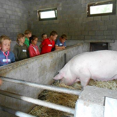 Aralea - Kinderboerderij Mikerf - boerderijweken
