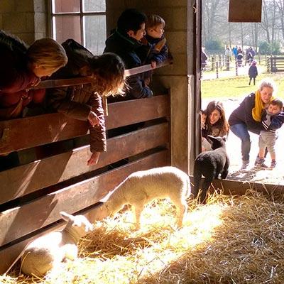 Aralea - Kinderboerderij Mikerf - milieueducatie