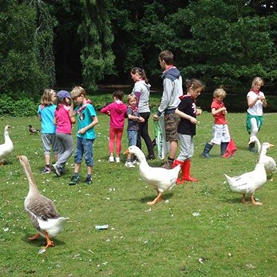 Aralea - Kinderboerderij Mikerf - klasbezoek