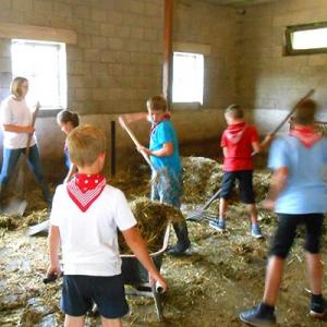 Aralea - Kinderboerderij Mikerf - stallenwerk